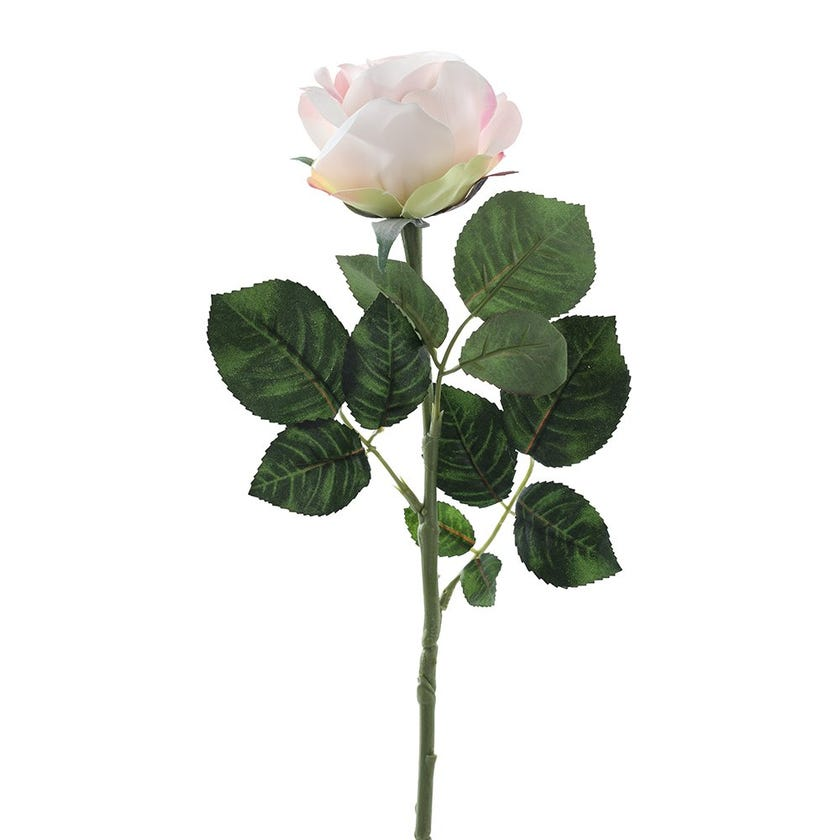 Rose Romance Single Stem, Pink – 57 cms