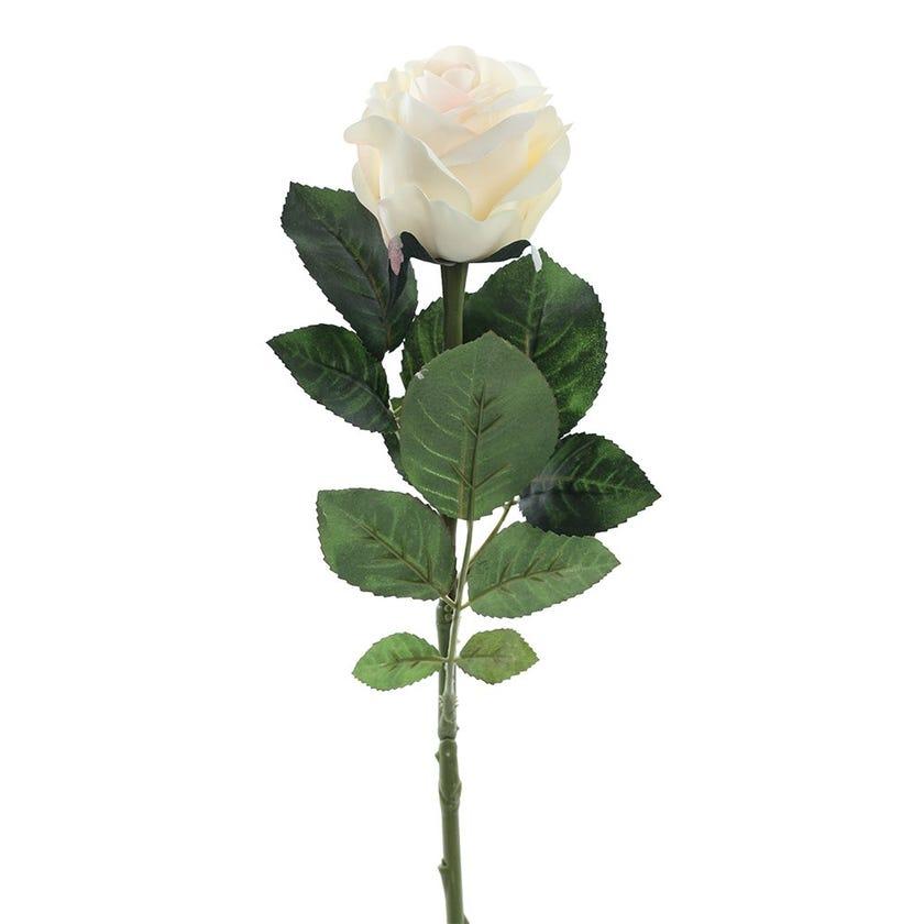 Rose Romance Single Stem, Cream & Peach – 57 cms