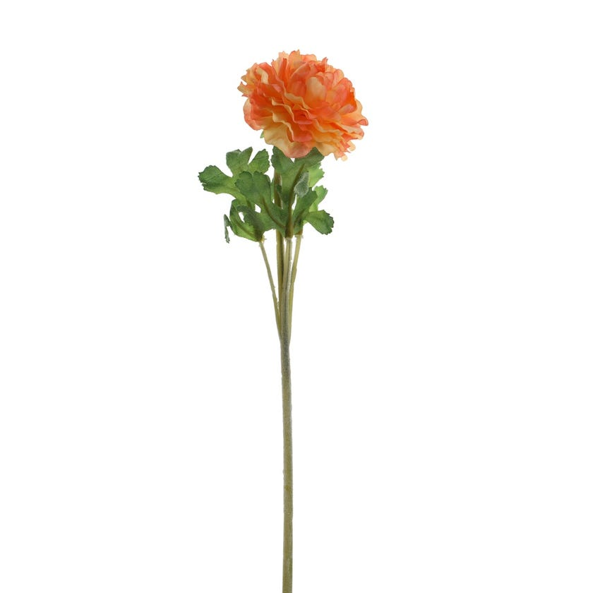 Ranunculus Dome Faile Stem, Apricot - 38 cms
