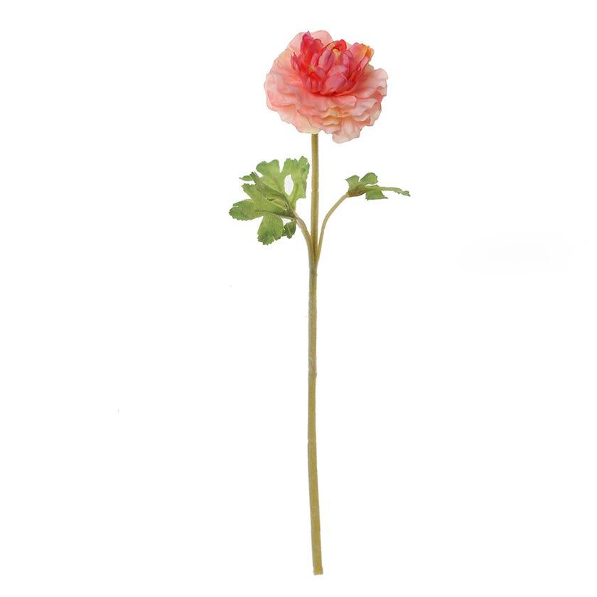 Ranunculus Dome Faile Stem, Pink & Peach - 38 cms