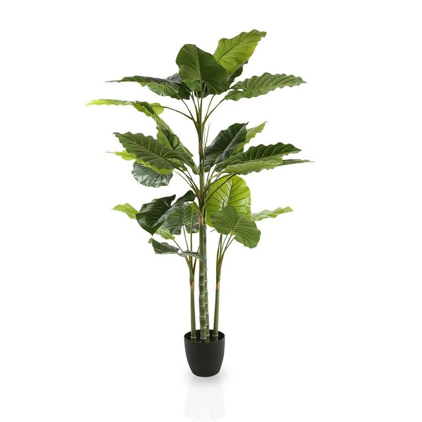 Regular Caladium Artificial Tree (Green, 152.4 cms)