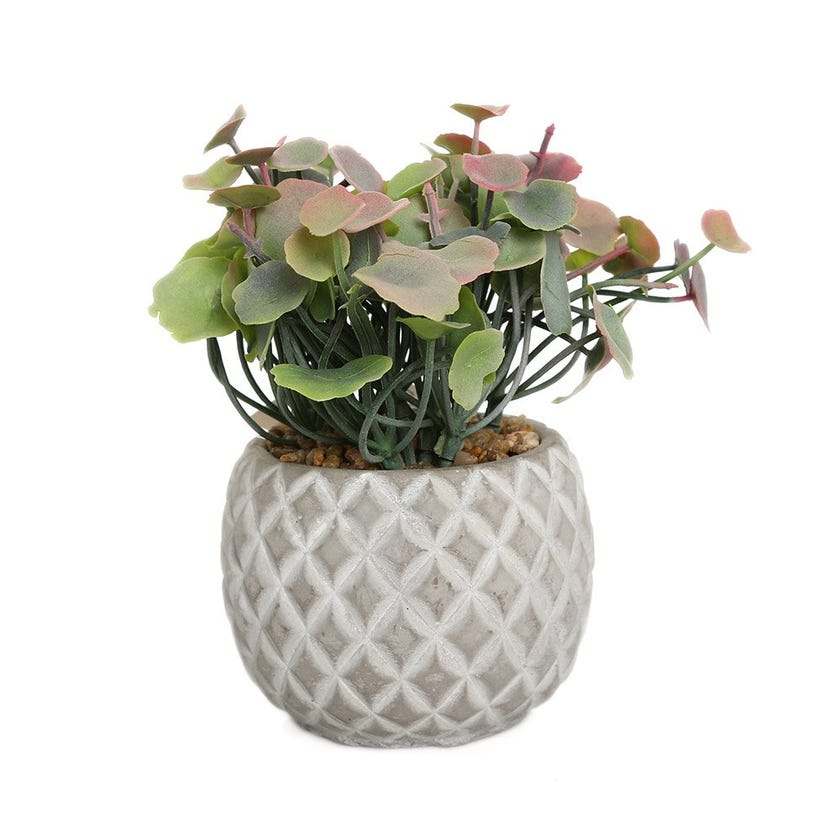 Lotus Leaf in Diamond Cement Pot, Green & Red - 15 cms