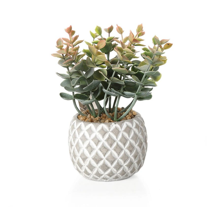 Artificial Eucalyptus in Cement Pot, Green - 18 cms