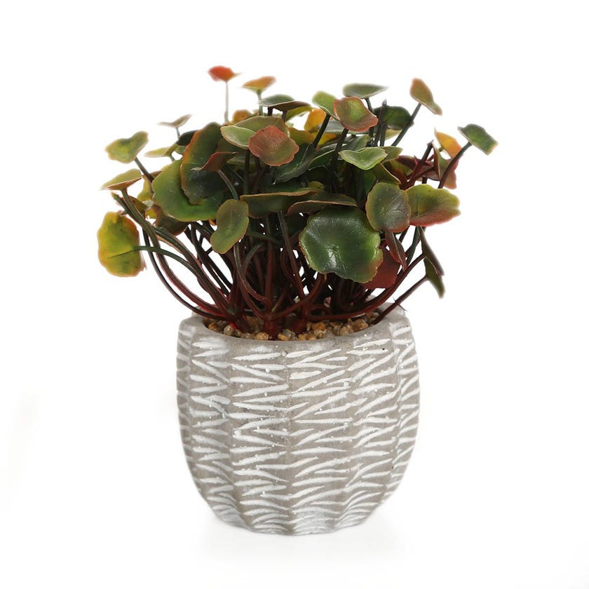 Lotus Leaf in Cement Pot, Green & Red - 15 cms