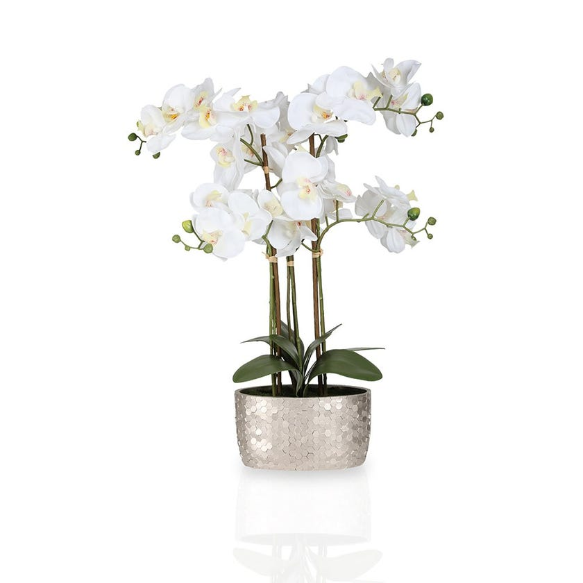 Real Touch White Orchid in Ceramic Pot – 61 cms