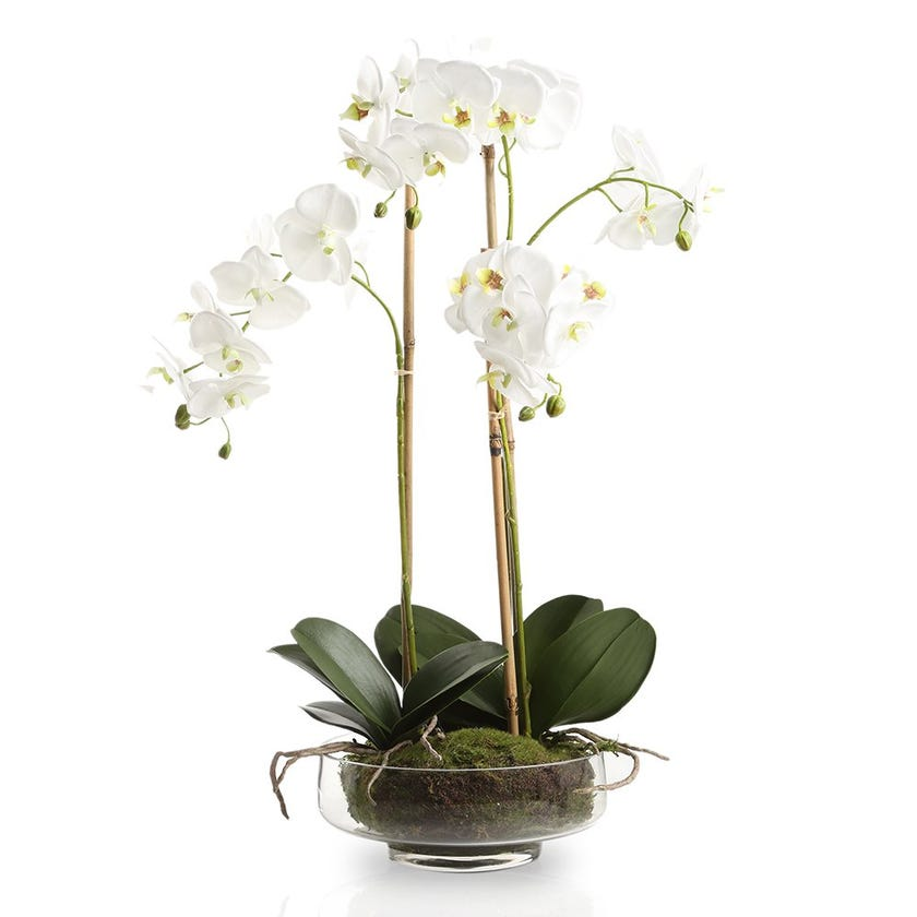 Artificial Orchid Plant with Glass Pot, White – 70 cms