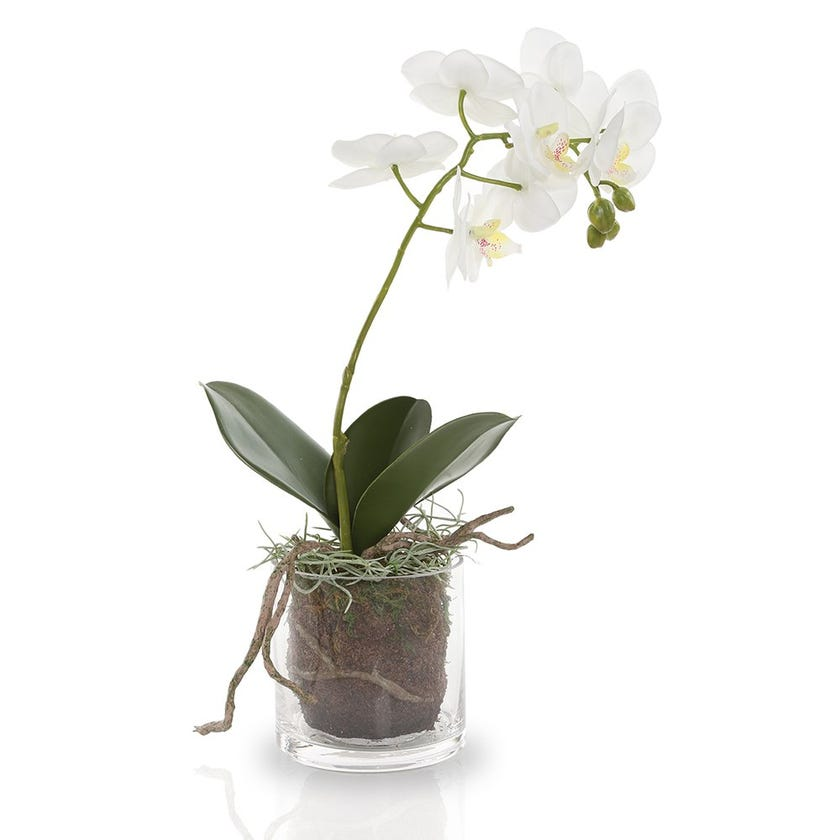 Artificial Orchid Plant with Glass Pot, White – 33 cms