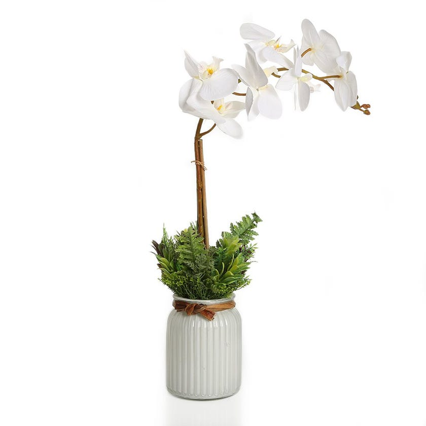 Orchid with Mix Grass Garden in White Glass Vase – 51 cms